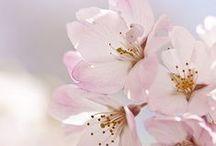 // blossom