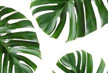 Plant //
