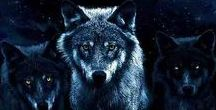 Wolf Pack RP / REAL WOLVES ONLY PLEASE. Message me if want to join. Add a wolf. No Powerplay, immortals, or anything that is not irl. Make it your own. If you would like to do One on One RP with someone please do it in your own messages so that peoples devices don't get spammed. It's your character. Have fun. Mating allowed, Many characters as you want. Can challenge alphas or others for their ranks.