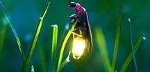 przyroda,motyle,ptaki, zwierzeta,owady
