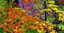Осень / Природа. Красивые фото, картинки, анимация, обои, интересные факты