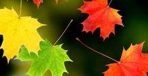 Осенние листья / Красота осенней листвы. Фото, картинки, анимация, обои