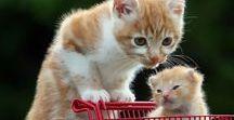 Рыжие котики / Природа, животные, кошки, красивые и забавные фото, картинки, анимация, обои, интересные факты