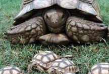 Черепахи / Природа, фауна, черепахи, фото, картинки, анимация, обои, видео, интересные факты