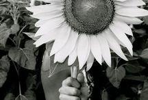My Endless Summer / by Megan Eisenhauer