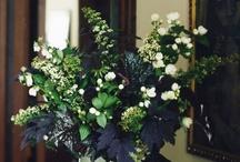 flowers/plants decor