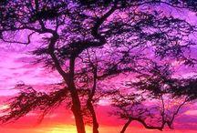 Nature / La nature rien de plus beau!
