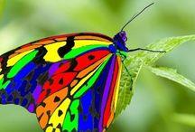 Papillon / Trop beau