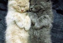 Cat!!! / Ils sont cute!