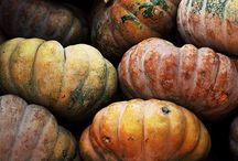 autumness & pumpkins! / Autumn / by Andrea Lamb