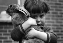 Flopsy, Mopsy, Cottontail. / by Hannah Grant