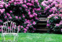 Gardening / by Christina