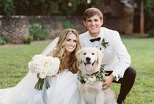 Animals at Weddings / These days, Fido is almost as important as your niece. Give them a reason to smile on your big day too with these ideas to incorporate your furry friend into your day.