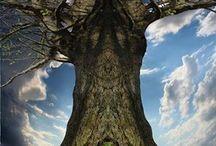 Древо жизни / Древо жизни