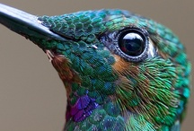 Hummingbirds - Infinity / Birds / by Gayla Whitfield