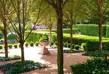 Garden Memories / by Karen in VA
