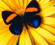 Butterflies / Beautiful butterflies