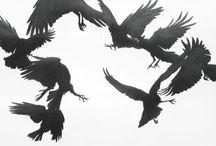we greet the unexpected visitor / six of crows duology by leigh bardugo