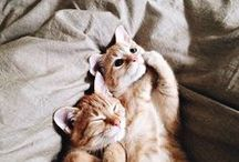 cats =^-^=