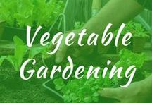 Vegetable Gardening / Vegetable gardening. Layout for beginner ideas. Starting a raised design with tips and plans for beginners. Backyard fences, and when to plant. Gardening hacks.