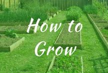 How to Grow / How to grow taller, longer plants. How to grow potatoes, blueberries, garlic, peppers, broccoli, lettuce strawberries, carrots, tomatoes, and grapes.
