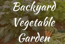 Backyard Vegetable Garden / Backyard vegetable garden ideas, design and layouts for small spaces. Backyard vegetable garden fences, raised containers, landscaping ideas and simple DIY plans and pictures.
