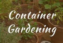 Container Gardening / Container gardening, vegetables and flowers ideas for beginners. Carrots and fruit, herbs, pots for patio gardens. Full sun design. DIY gardening for veggies.