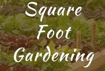 Square Foot Gardening / Square foot gardening layout and plans for beginners. Ideas for dividers, soil, template, spacing. Trellis, design planner. Ideas for irrigation and strawberries.