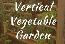 Vertical Vegetable Garden / Vertical vegetable garden DIY wall ideas. Link, pallet, layout for plants, and fences. Trellis. Ideal gardening for apartments and small spaces. Use PVC pipes indoors.