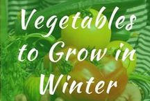 Vegetables to Grow in Winter / Vegetables to grow in winter. What plants and seeds to grow in cold weather. Root cellar, raised beds, container gardening and articles on growing vegetables in the winter. Spring season gardening.