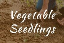 Vegetable Seedlings / Vegetable seedlings. Identification, seed starting, tips and tricks on how to grow herbs in pots in the spring using raised beds. Articles on DIY garden ideas and products.