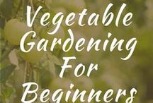 Vegetable Gardening For Beginners / Vegetable gardening for beginners in backyards, or small spaces. Learning how to grow in raised beds, pots, DIY instructions. How to grow from seed starting. Grow gardens in different seasons. Simple, yards, herbs.