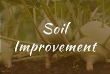 Soil Improvement / Soil improvement tips for making compost, raised beds, Other. Articles for products, watches, and how to make clay for a healthy garden. Vegetable garden for the home.