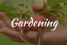Gardening / Vegetable backyard ideas and tips for beginners, design layout, container for herbs, DIY fence for veggies