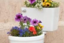 garden ideas / by desiree Davis