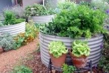 garden ideas / by Kellye Copas
