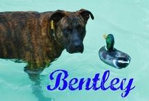 Dogs, Dogs, Dogs! / by Sara Bernice