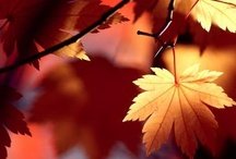 autumn / by Marie Claire Francoeur
