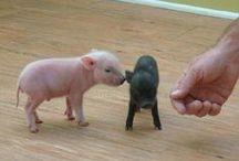 Animals! / by Sammi Blonder