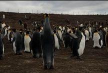 Malvinas, pasado y futuro / Algunas imágenes del recorrido que la periodista Carolina Delisa hizo por las islas como parte de la producción de un especial que puede verse aquí: http://especiales.elobservador.com.uy/Malvinas/