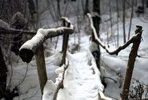 photograph : paths
