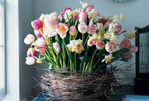 Spring has Sprung / Spring and Easter home decor as well as recipe ideas featuring the best of the Spring garden.