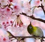 Beautiful ♥ / Die Natur schenkt uns so viel Schönes!✨