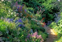 garden and yard / by Michelle Lamanet