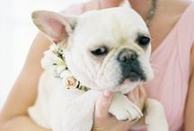 ~ FOUR-LEGGED FRIENDS ~ / Pets in the wedding.....a true pet owner loves their animal like they do their family, so of course they should be invited to the biggest day of your life. Be inspired by how seamlessly they can be coordinated into the overall style of your wedding. / by BeeCustom Design