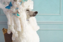 shh! its a poodle! / by Wendy McWilliams