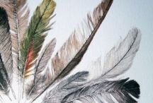 Feathers  / Birds of