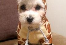Too Cute!!!! / by Jennifer Jones-Miller