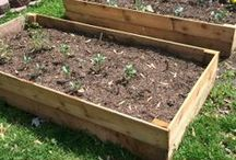 Gardening Ideas / Beautiful garden require care, so find some knowledge here and plenty of ideas to grow a beautiful garden