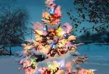 Christmas/Winter beauty / by Sherry Johnson